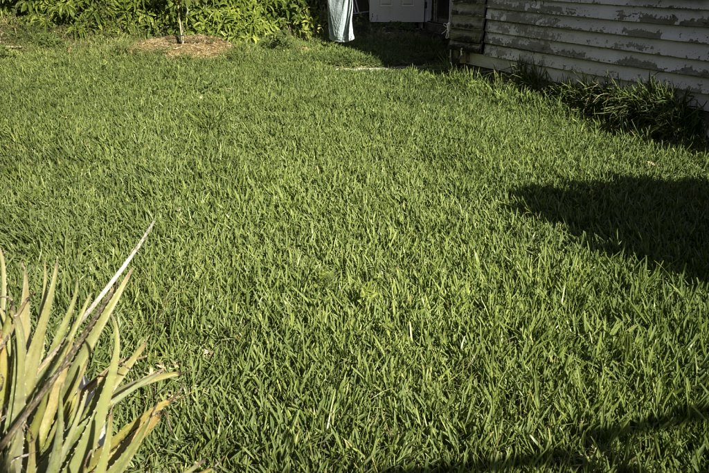 Lawn with Aloe Plant