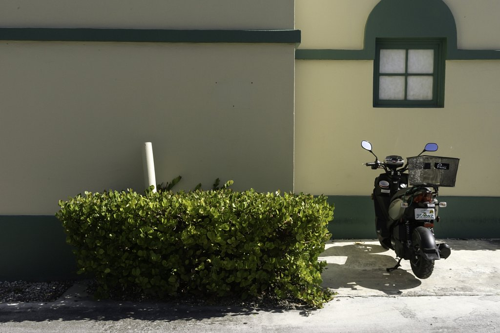 Motorcycle and Shrub