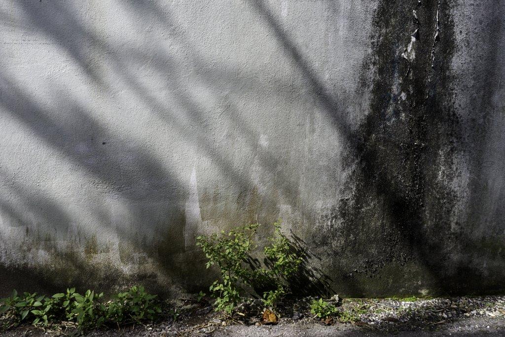 Mildewed Wall
