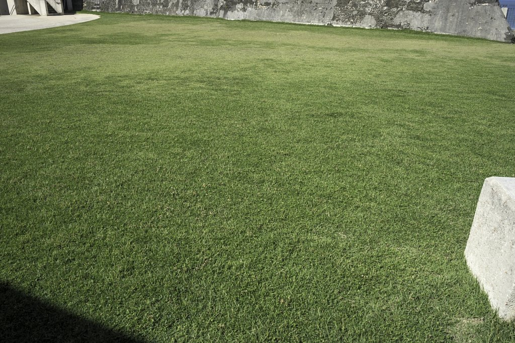 Grass at Fort